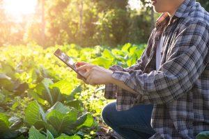 AgroMercador: parceria com ME em aplicativo inédito de agronegócio